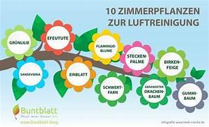 Pflanzen Luftreinigung Schlafzimmer : 10 zimmerpflanzen zur luftreinigung ~ Eleganceandgraceweddings.com Haus und Dekorationen
