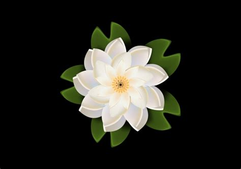 white lotus wallpaper alfreedo  graphics