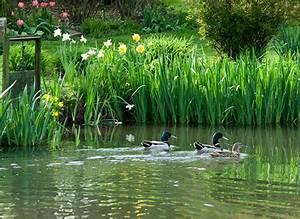 marvelous creer un jardin d ornement 4 cr233er un plan With creer un jardin d ornement