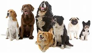 south paws doggie daycare puppy and dog daycare dog With private dog sitters near me