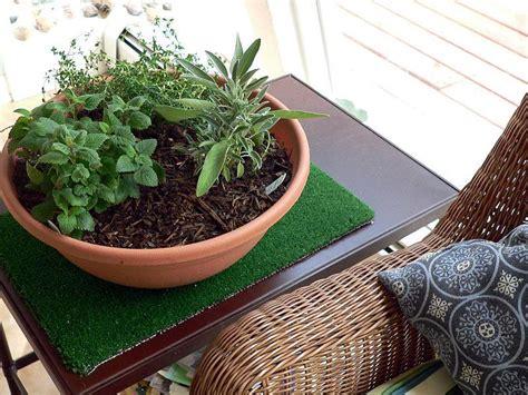 how to grow indoor herb garden gardening with