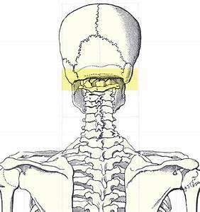 File Occipital Ridge Gif