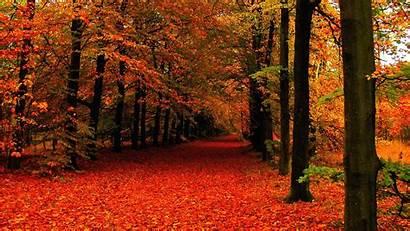 Autumn Leaves Wallpapers Scene Leave