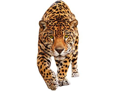 Fliesenaufkleber Leopard by Wandtattoo No 648 Creeping Jaguar Wildkatze Leopard Gepard