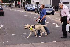 Quotes about Guide dogs (50 quotes)