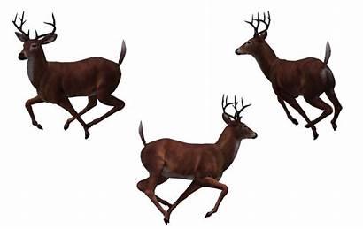 Deer Buck Clipart Wayne Reindeer Clip Watermark