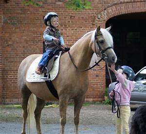 Pferde Kaufen Bremen : welsh pony wallach stute in bremen tiere kleinanzeigen ~ Orissabook.com Haus und Dekorationen
