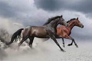 Bilder Von Pferden : pferde im sturm poster online bestellen posterlounge ~ Frokenaadalensverden.com Haus und Dekorationen