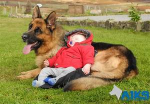 family protection dogs children home security dogs With dog babysitting service