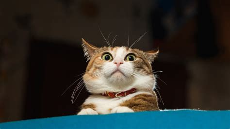 funny cat gifs   feline