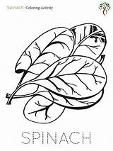 Spinach Coloring Template Activity sketch template