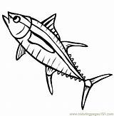 Tuna Coloring Fish Pages Yellowfin Fin Sea Drawing Printable Cartoon Yellow Template Drawings Shark Fishes Clipart Sardine Clip Thecolor Coloringpages101 sketch template