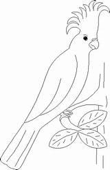 Perroquet Papagei Colorare Mewarnai Kolorowanki Kleurplaten Papagaai Papugi Papuga Malvorlage Pappagalli Gify Colorier Kolorowanka Pappagallo Animierte Animaatjes Loros Papageien Papagayo sketch template