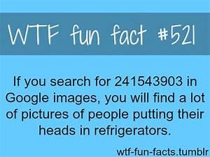 241543903, facts, text, textss - image #686948 on Favim.com