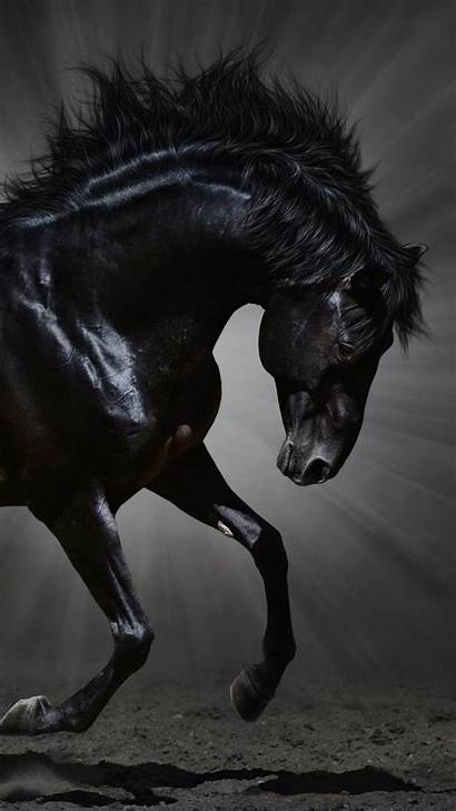 Horse Horses Backgrounds Dark Galaxy Desktop 4k