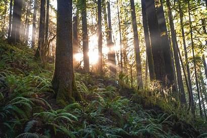 Forest Trees 4k Nature Jungle Landscape Environment