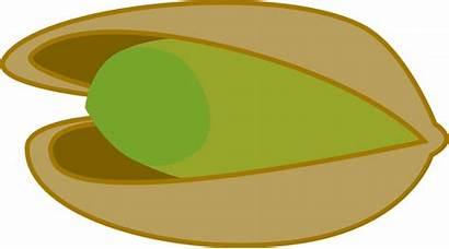 Pistachio Pistacho Transparent Pistachos Pistachios Deviantart Pngimg