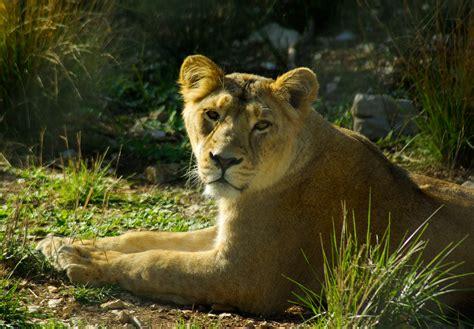 Aventure, Faune, Zoo, Afrique, Félin