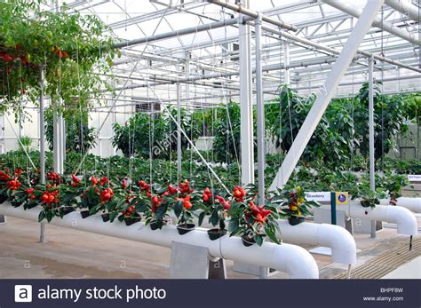 Best Images About Hydroponics On Pinterest Gardens