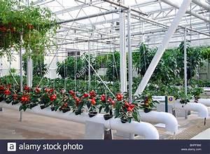 Hydroponic Garden At Epcot  Disneyworld Orlando  Florida