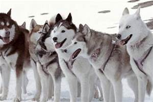 EIGHT BELOW - Go for the dogs