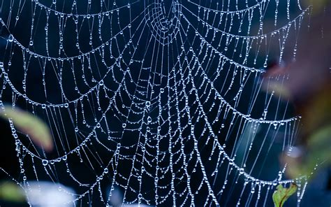 17 Incredible Spiderweb Wallpapers With Water Drops And