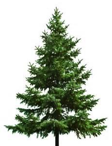 christmas trees jolly reindeer christmas blog