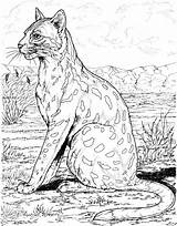Leopard Coloring Pages Animals Snow Printable Wild Wildlife Habitat Coloringbay Getcoloringpages African sketch template