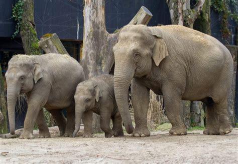 amersfoort dierenpark babyolifant olifant laat zich wachten niet lang meer dierentuin