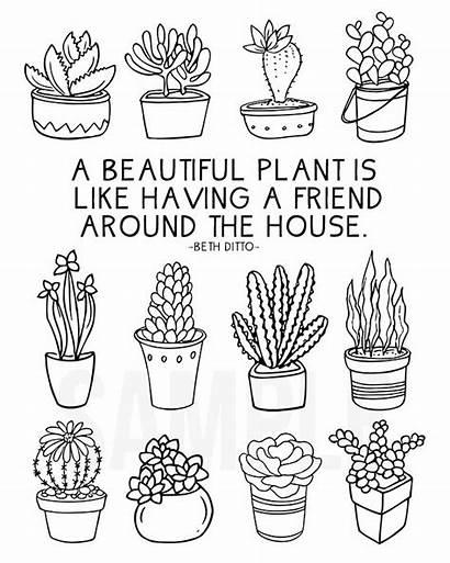 Coloring Succulent Cactus Pages Succulents Plant Sheet
