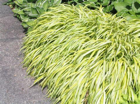 perennial grass plants blog not found