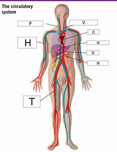 Arteries And Veins Diagram To Label