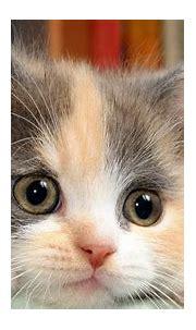 Cute Cats Wallpaper Funny #10560 Wallpaper | WallDiskPaper
