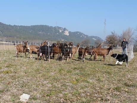 chambre d agriculture aix en provence jean michel jolly berger éleveur et formateur agréé pour