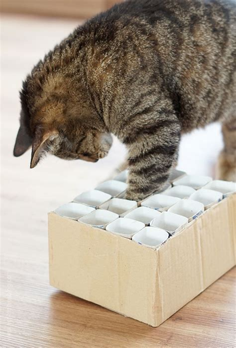 katzenspielzeug fummelkiste diy pets cats diy cat