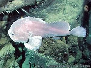 THE FUCKING OCEAN YOU GUYS — Blobfish