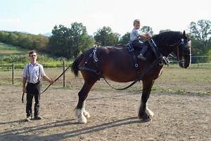 Mares Tails Weeds Drum Horse Drum Horses Shire Horse Brabant