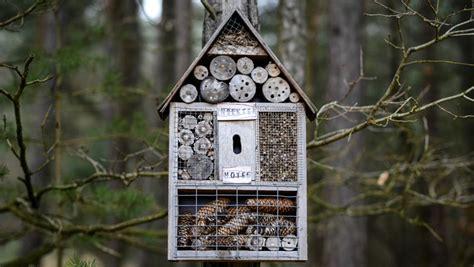insektenhotel selber bauen bauanleitung und mehr sat 1 ratgebe