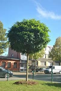 Kleiner Baum Garten : kleiner baum auf einer wohnalage in lehrte foto vom 30 ~ Lizthompson.info Haus und Dekorationen