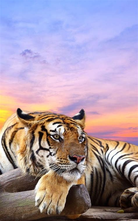 Animal 3d Live Wallpaper - animals live wallpaper android apps on play