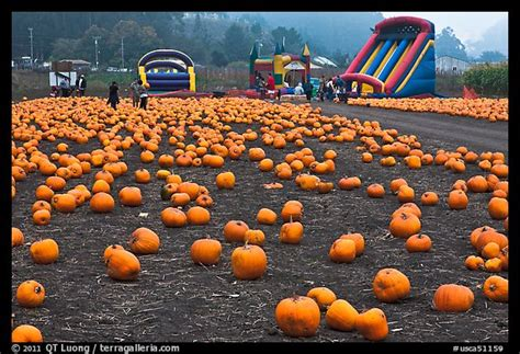 Half Moon Bay Pumpkin Patches by Download Pumpkin Patch In Half Moon Bay Ca Free Software