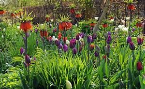Tulpenzwiebeln Im Frühjahr Pflanzen : so pflanzen sie tulpenzwiebeln richtig tulpenzwiebeln pflanzen und stauden ~ A.2002-acura-tl-radio.info Haus und Dekorationen