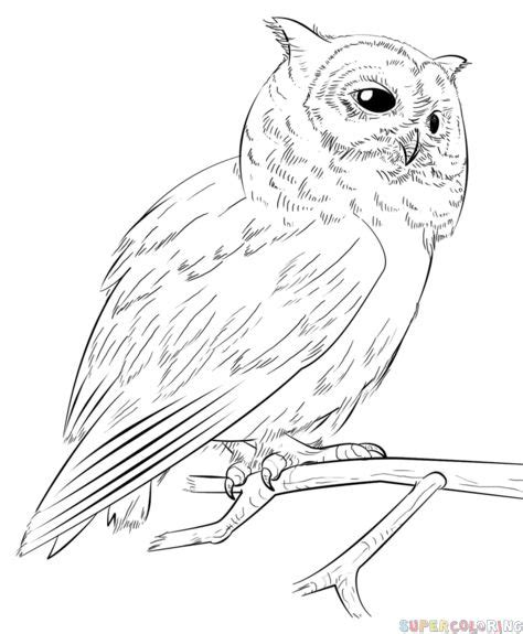 draw  realistic owl step  step drawing