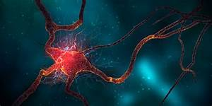 5 Ways To Harness Neurogenesis: Boost Your Brain | High ...