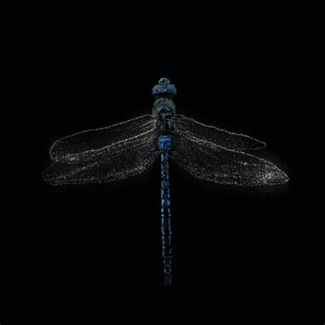 Animated Dragonfly Wallpaper - free animated bugs insects dragonflies gifs at best