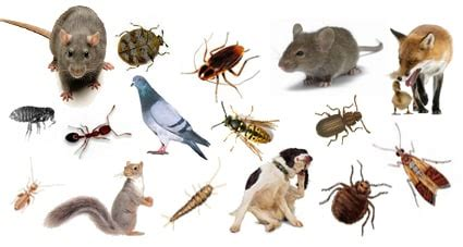pest control cardiff  knowledgeable experts  care