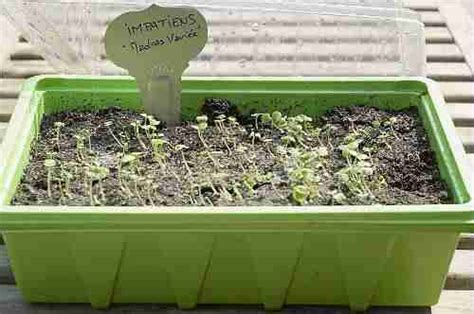 r 233 aliser une mini serre pour les semis