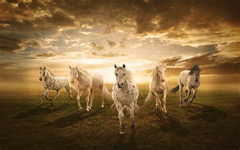White Horses Desktop Background