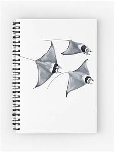 Top How To Draw A Manta Ray Step By Step