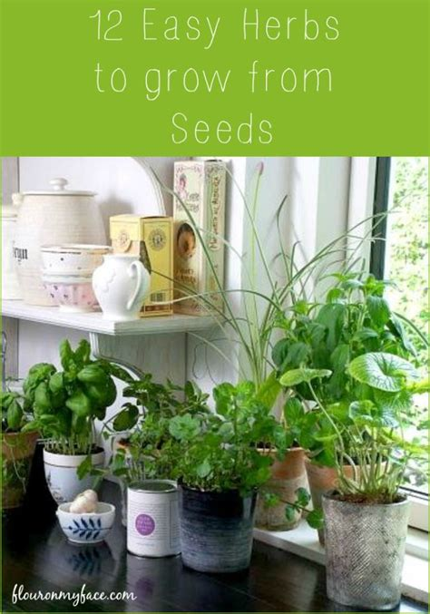 12 Easy Herbs To Grow From Seeds  Flour On My Face